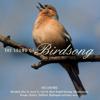 Birdsong - Wren