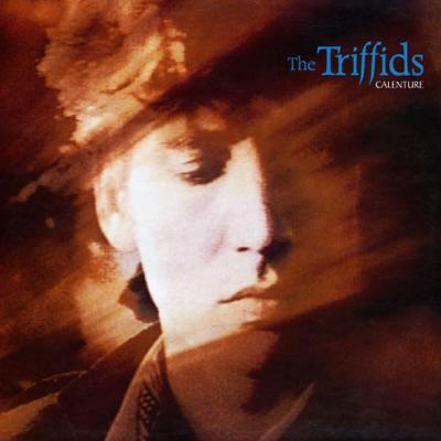Calenture - The Triffids