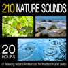 Pro Sound Effects Library - Morning Birds Singing in a Forest artwork