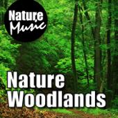 [Download] Forest Floor - Gentle Calling Birds MP3
