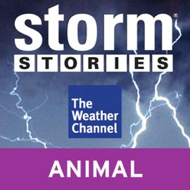 Storm Stories: Hallem, NE Tornado (Unabridged) [Unabridged Nonfiction] audiobook