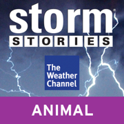 Storm Stories: Weather Dog