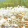 Splendid Jigu Instrumental Music Sound, Vol. 7 (화려한 지구 경음악 사운드 7집) - Splendid Jigu (화려한지구)