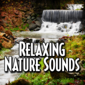 Meditate to Tranquil Forest Ambience With Nature Sound