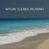 Nature Sounds Relaxing: the Most Relaxing Music Imaginable. Relaxing Sounds of Nature, Sound of Rain, Calm Music and all Nature Sounds for Contemplative and Reflective Minds