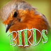 Sound Effects Library - Reed Warbler artwork