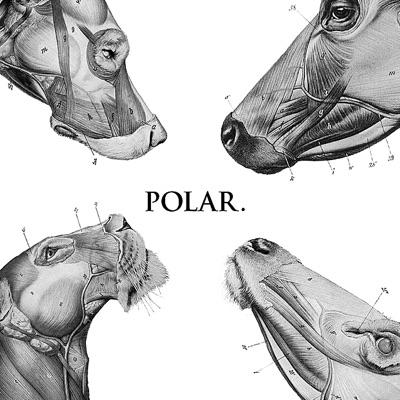 This Polar Noise - EP - Polar