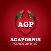 Persiana Américana - Agapornis