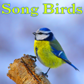 Song Birds - Sounds of Nature