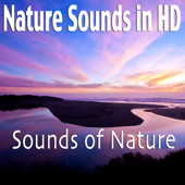 [Download] Beautiful Forest Sunrise With Birds MP3