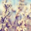 Nora En Pure - Norma Jean (Radio Mix) artwork