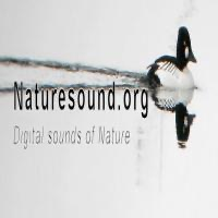 nature sound's Podcast