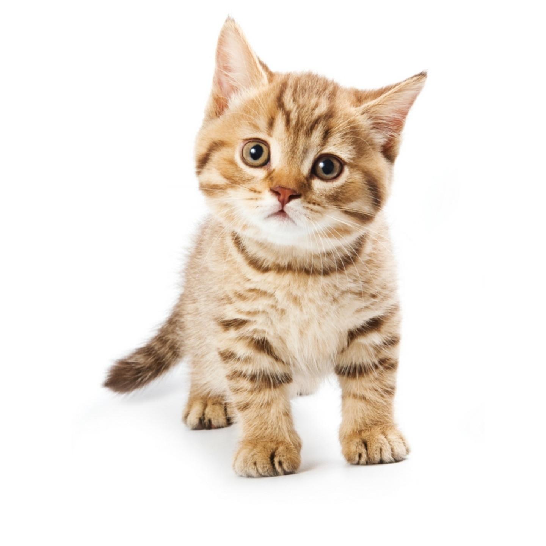 Le chat (La vie du chat racontée en musique)