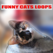 Cat Kitten Meowing Loop (Gato Maulla) [Chat Miaule] [Katze]