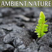 Ambient. Nature