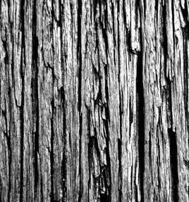 Norwegian Wood - Single by Jayne Plumridge & Melanie Blizard