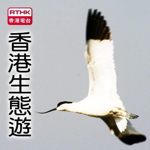 香港電台: 香港生態遊