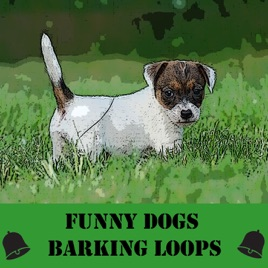 Funny Dogs Barking Loops by Z Melodic Dog
