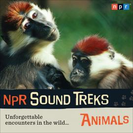 NPR Sound Treks: Animals: Unforgettable Encounters in the Wild audiobook