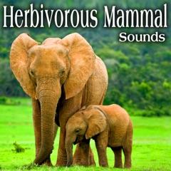 Herbivorous Mammal Sounds