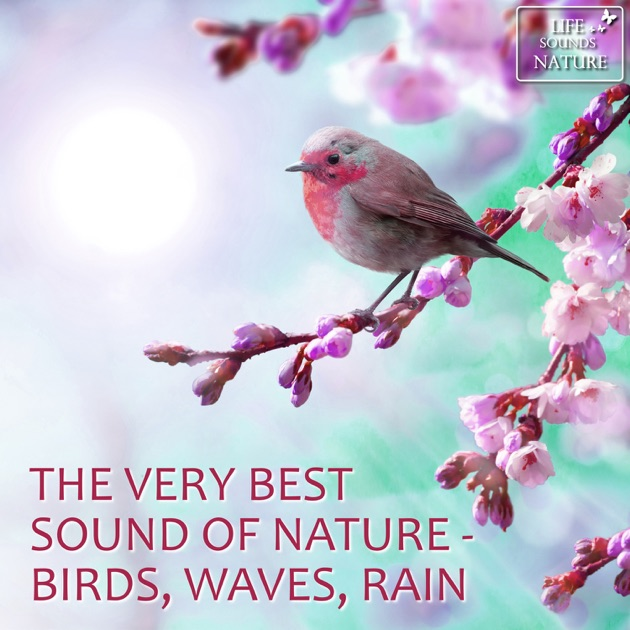 ‎The Best of High Quality Nature Sounds With Ocean Waves, Rain, Birds,  Creek & Forest by Life Sounds Nature