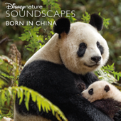 Panda Mother And Baby Near River In Forest Disneynature Soundscapes - Disneynature Soundscapes