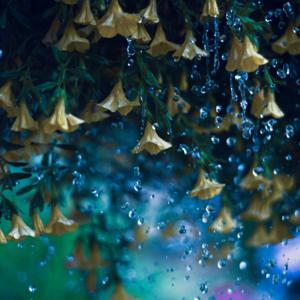 Sleep Sounds of Nature - # 1 Sleep Sounds of Rain: Deep Relax and Sleep with Soothing Raining Sound