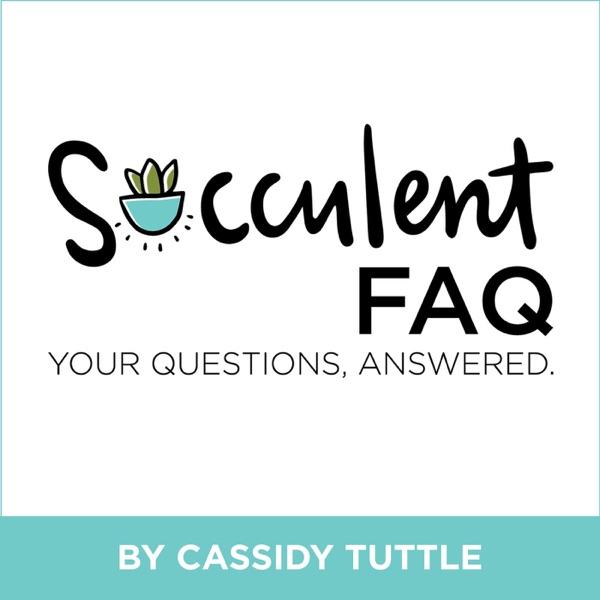 The Succulent FAQ