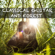 Guitar - Classical Guitar and Forest