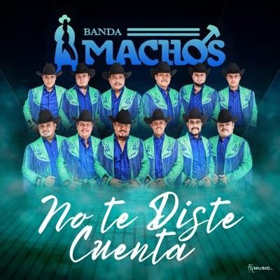 No Te Diste Cuenta - Single - Banda Machos