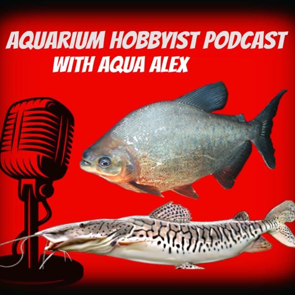 AHP Fish of the Week June 12: Black Banded Leporinus (Leporinus