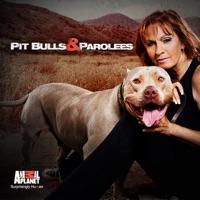 Télécharger Pit Bulls and Parolees, Season 3 Episode 4
