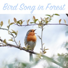 Bird Song in Forest - Relaxing Nature Sounds