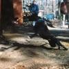 J. Cole - Lion King on Ice