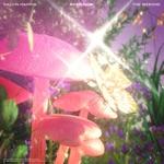 Album - THE WEEKND/CALVIN HARRIS - OVER NOW