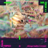 dunya-halim-remix-single