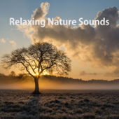 Birds Chirping - Nature Sounds & Baby Sleep