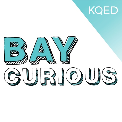 Cover image of Bay Curious