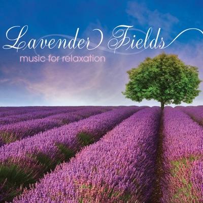 Lavender Fields - Steve Wingfield
