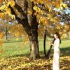 Autumn Harp - Hoainiem