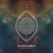 Naegleria