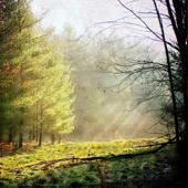 Borrowing the Past (Hammock Remix)
