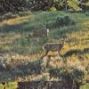 Hakone Garden (Feat. Hakone)