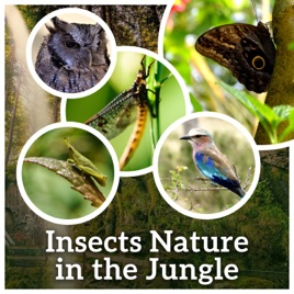 Insects Nature in the Jungle: Healing Sounds of Nighttime Crickets,  Singing Birds, Amazonian Forests, Savanna Steppes, Walk in the Meadow by