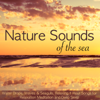 Various Artists - Nature Sounds of the Sea – Water Drops, Waves & Seagulls, Relaxing 1 Hour Songs for Relaxation Meditation and Deep Sleep artwork