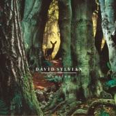 David Sylvian - Random Acts of Senseless Violence
