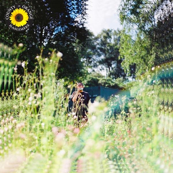 Rex Orange County - Sunflower song lyrics
