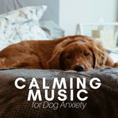 Calming Music for Dog Anxiety - Academy to Relax Pet Songs