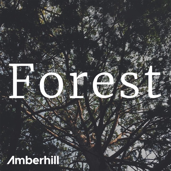 forrest single men Forrest's best free dating site 100% free online dating for forrest singles at mingle2com our free personal ads are full of single women and men in forrest looking for serious relationships, a little online flirtation, or new friends to go out with.