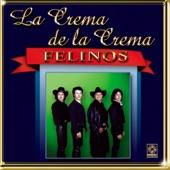 Los Felinos - Las Hijas De Don Simon